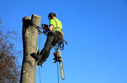 Tree-Services-2